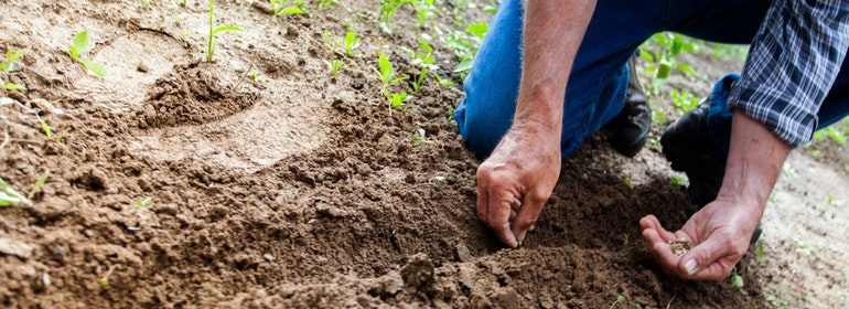 Soil is not enough – what does it mean to be truly rich?